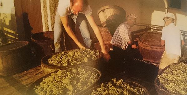 Foto - Uvas Chardonnay recém-colhidas na região de Mâcconais