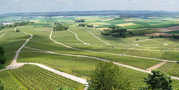Panorama aéreo da paisagem de vinhedos franceses