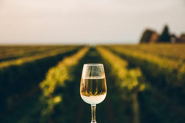 Taça com vinho branco em uma vinícola