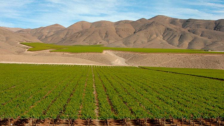 Vales chilenos são ideais para o cultivo da uva carménère