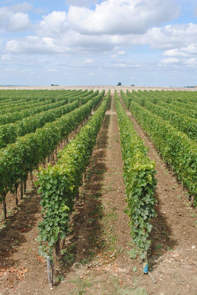 França popularizou o vinho rosé no mundo