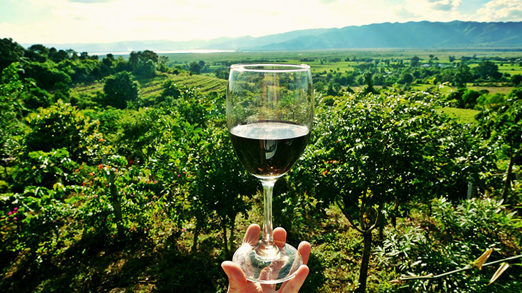 Idade do vinho pode ser conhecida a partir do exame visual