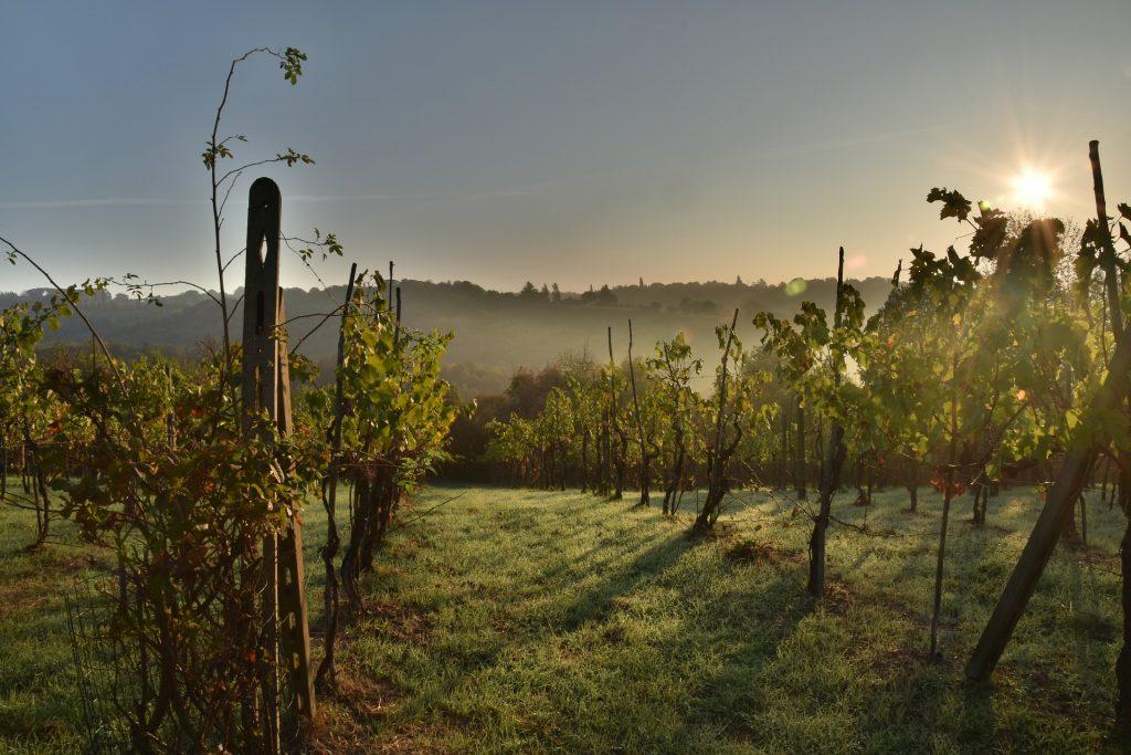 Agricultura orgânica e vinhedos velhos podem expressar melhor o terroir