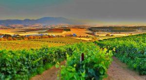 Na Primavera começa o plantio das novas vinhas do Hemisfério Sul